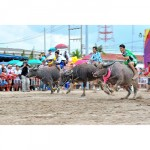 The annual Chonburi Buffalo Racing Festival - 28 September - 4 October 2017