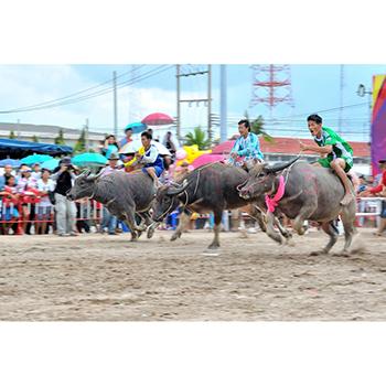 Chonburi-Buffalo-Racing-Festival