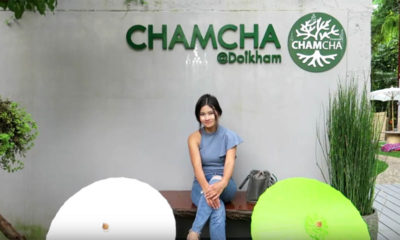 werehumans web design and SEO Pattaya