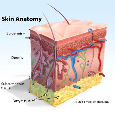 nicha skin