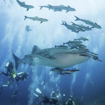 Similans Liveaboard Trip 2019 at Mermaids Dive Center 5 Star PADI CDC – 16th to 21st April