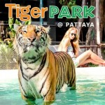 Tiger PARK @Pattaya