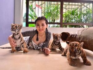 tiger-park-1-1024x768